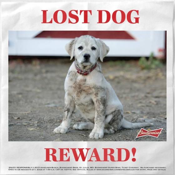 rs_600x600-150122101946-600.Budweiser-Lost-Puppy.jl.012215