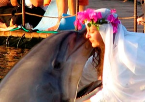 dolphin marriage
