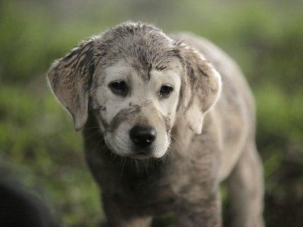 lost-dog-1024