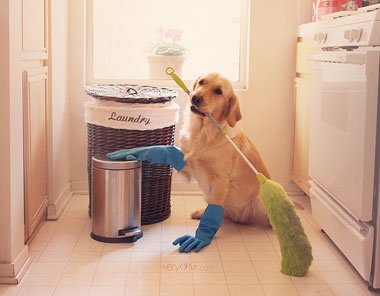 cleaning-vivi-380x296-opt.jpg