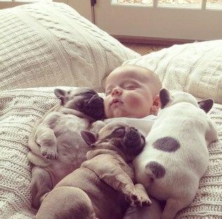 dogs-cuddling6.jpg