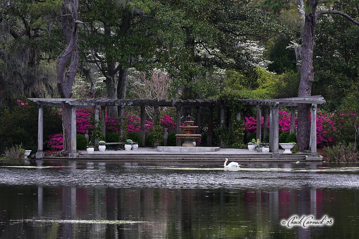 Airlie-Gardens-Swans-Coastal-NC